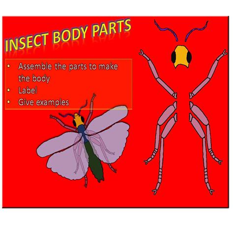 insect body sections insect body parts