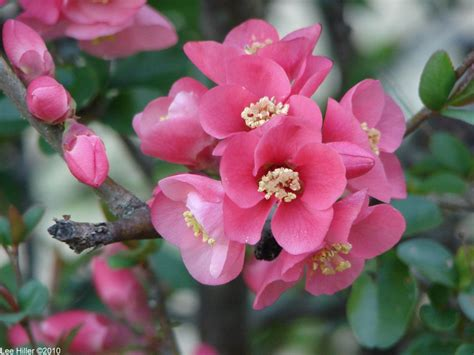 the flowers that bloom in the spring and little lizards too hike our planet hikeourplanet