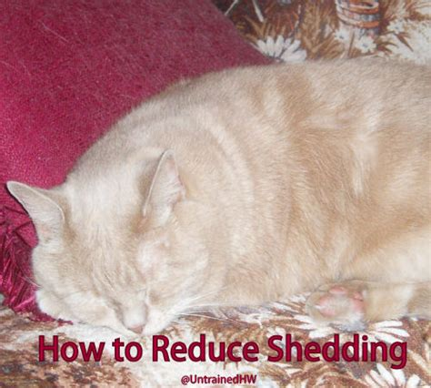 How To Decrease Cat Shedding by How To Reduce Shedding For Your Pet
