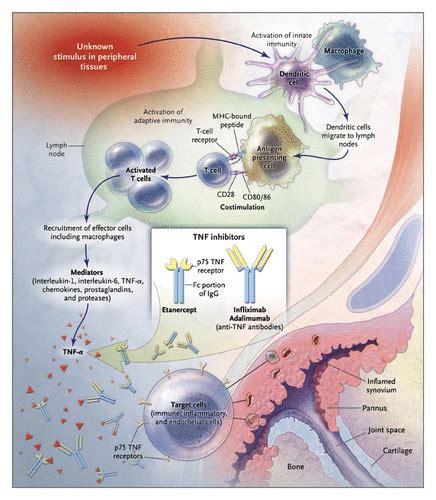 Salep Fluconazole sulfasalazine rheumatoid arthritis mechanism diflucan 100