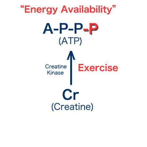 is creatine kinase creatine kinase creatine information center