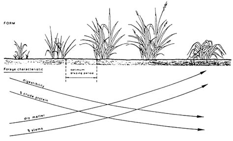 vegetation pattern formation in semi arid grazing systems pasture cattle coconut systems