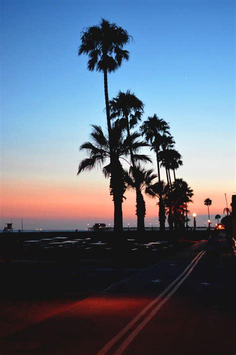 summer paradise palm tumblr