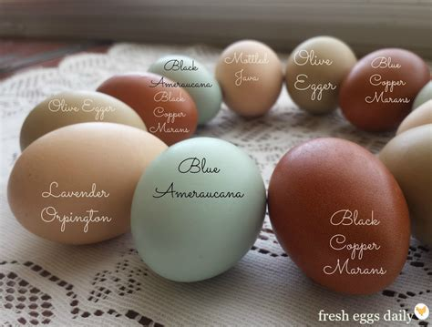 do chickens lay colored eggs which breeds of chickens lay colored eggs fresh eggs daily 174