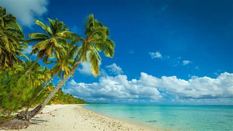 nature landscape beach sea island palm trees