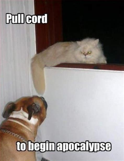 Dog And Cat Memes - 25 funny cat memes cattime