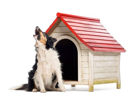 why do dogs howl at sirens why do dogs eat grass 8 facts explained find me a gift