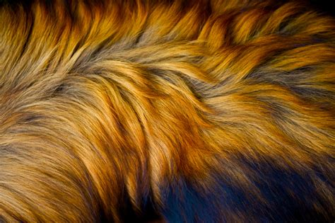 a of dogs fur picture of a s fur processed to oversaturate flickr photo