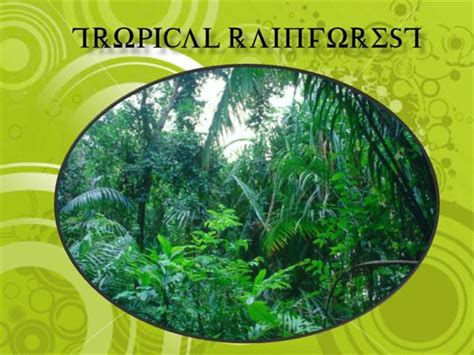Tropical Rainforest Authorstream Rainforest Powerpoint