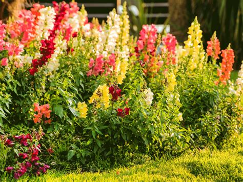 Cutting Flower Garden Here S How To Grow Your Own Bouquet With A Cut Flower Garden Wstale