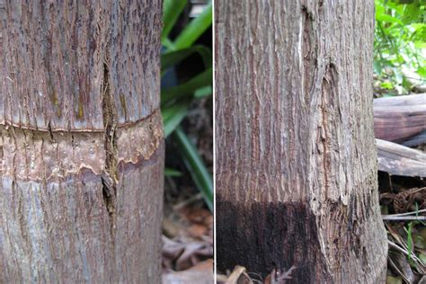 fruit tree fungus identification fruit tree disease identification pictures to pin on