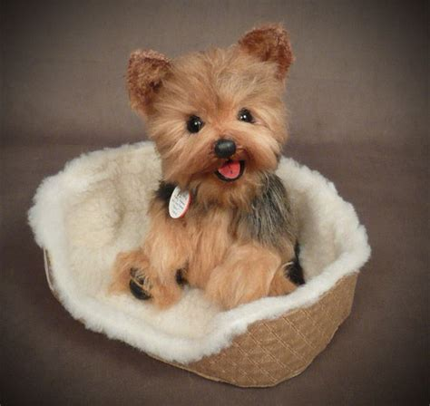 what are yorkies like best 20 mini yorkie ideas on teacup yorkie puppies and whats a