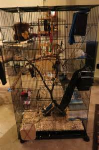 Pet Friendly House Plans by How To Build A Flying Squirrel Cage Woodworking Projects