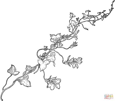 vine coloring pages snapdragon vine coloring page free printable coloring pages