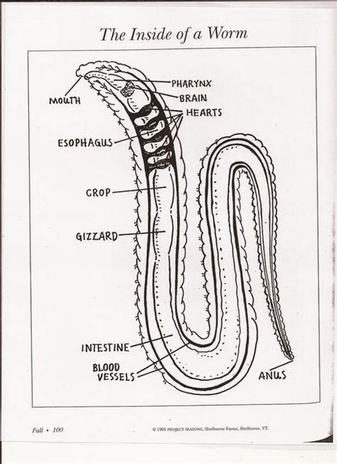 flatworms and roundworms lesson 0370 tqa explorer