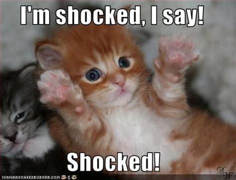 Shocked Cat Meme - shocked meme memes