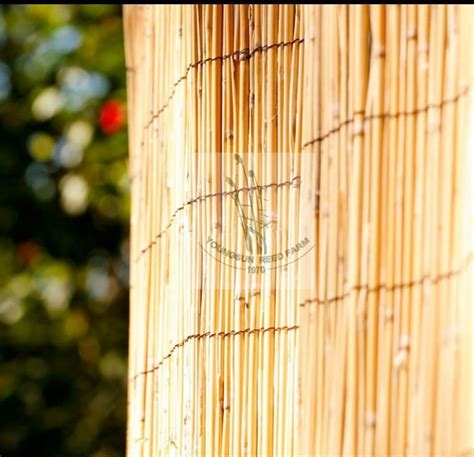 bamboo reed curtains bamboo reed fencing screening panel buy reed fencing