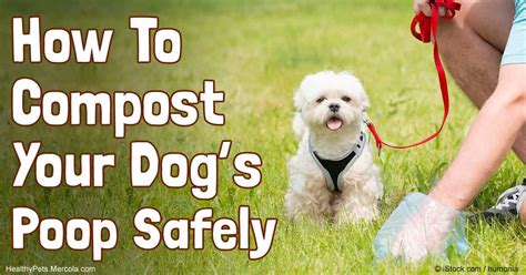 what to do when a dog poops in the house what to do with dog poop in your backyard 28 images poo vault an easier way to