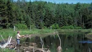 Vermont Jim Jeffords Glastenbury Mountain The Trust For Public Land