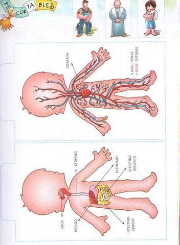 imagenes figurativas del cuerpo humano fichas infantiles del cuerpo humano para imprimir gratis