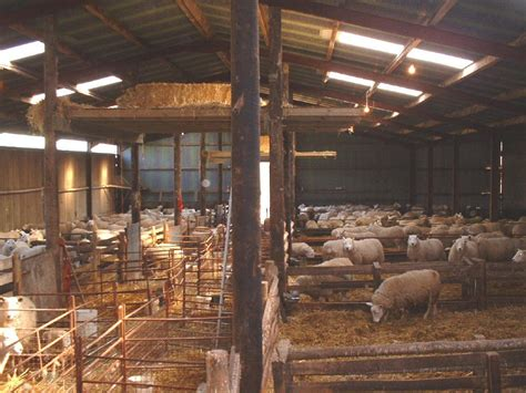 Sheep Lambing Sheds by Related Keywords Suggestions For Sheep Buildings