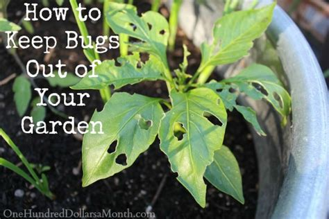 how to keep pests out of your garden one hundred dollars a month garden frugal living