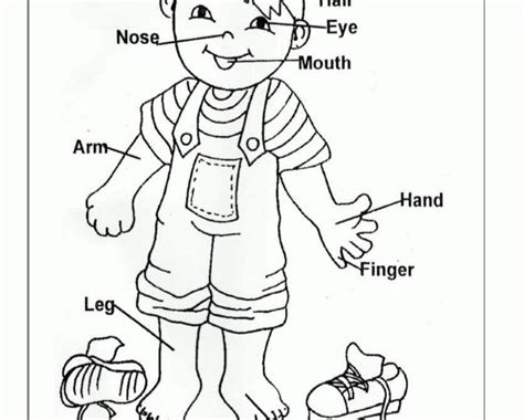 Preschool Coloring Pages My Body | convenient free coloring pages of my body part preschool
