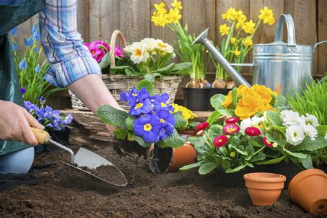 What Flowers Should I Plant In My Garden When To Plant A Garden The Allstate
