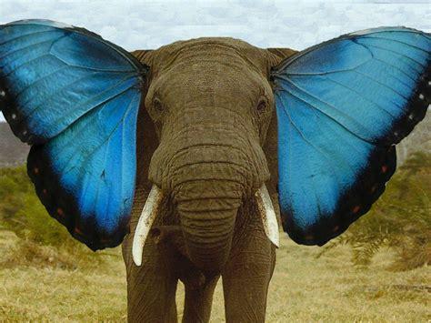 butterfly ear pin elephant butterfly ears on