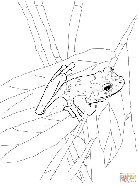 green frog coloring page 301 moved permanently