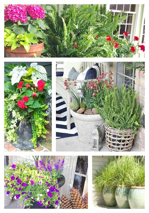 container gardening plant combinations creative garden container pot combinations and tips