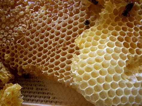 Honey Comb Honeycomb file honey comb jpg