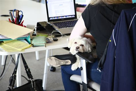 airbnb for dogs airbnb for dogs has investors woofing cbs news