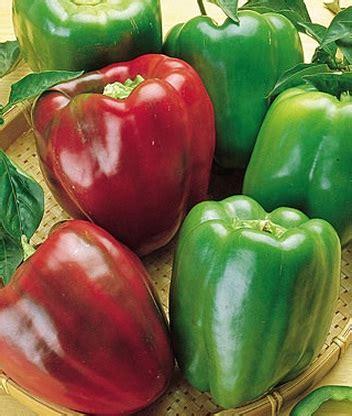 Benih Paprika Merah benih paprika california pepper
