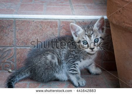 how to make a scared kitten comfortable photo beautiful orange cat stock photo 279073502