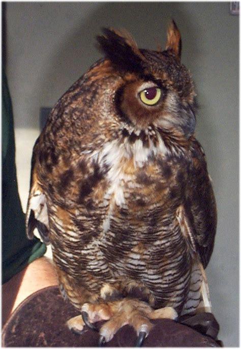 Zoo Zoo Brush Owl great horned owl whozoo