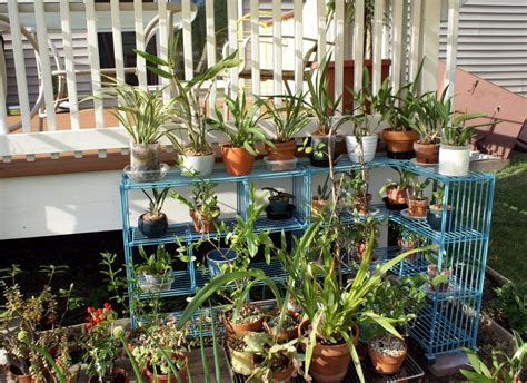 Make Plant - make plant shelves iimajackrussell garages best plant