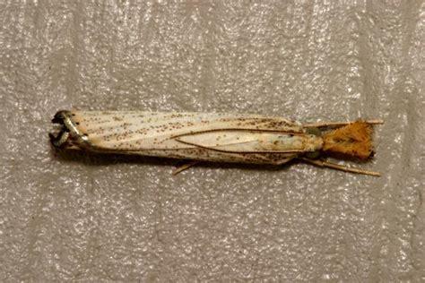 small moths in bathroom tiny moths in bathroom universalcouncil info
