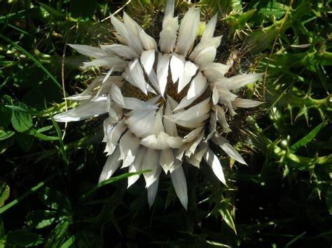fleuriste grange blanche fleurs de montagne savoie