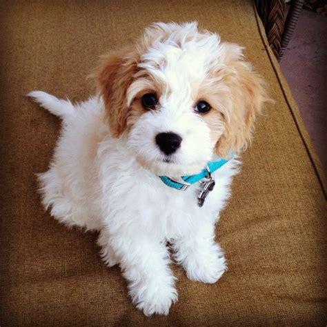 cutest puppy breeds best 20 dogs breeds ideas on