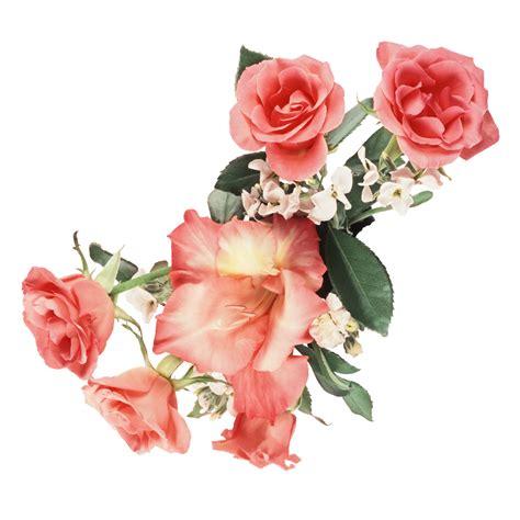 imagenes flores png fotos png de flores imagui