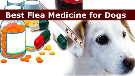 tick medicine for dogs best flea medicine for dogs top 10 flea medicine reviews