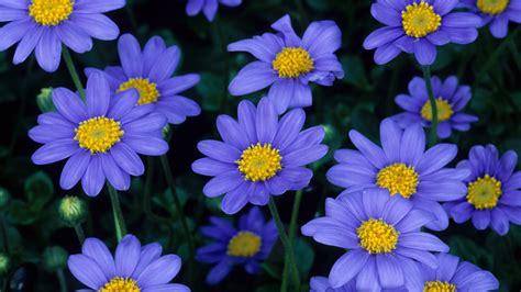 Download Blue Flowers Wallpaper 1920x1080 Wallpoper 426968 Blue Flower