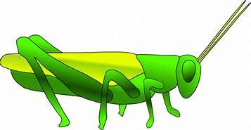 Image result for Cartoon Grasshopper