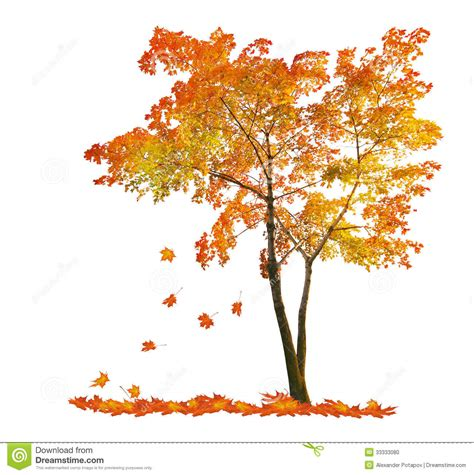 red autumn maple tree with falling leaves stock photo