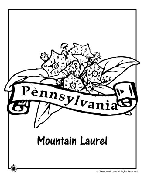 pennsylvania state flower coloring page woo jr kids