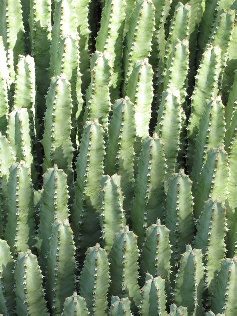 las aventuras euphorbia or cactus