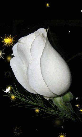 Läuse An Blumen 4425 by Rosa Blanca Gif My Gifs 10 Flores Flores