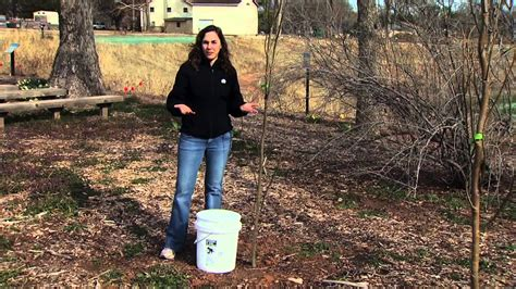 fruit tree watering system proper tree irrigation
