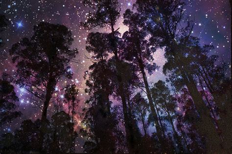 cool tree stars via image 977341 by awesomeguy on favim